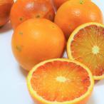 有機JAS法準拠 無農薬 ブラッドオレンジ 5kg 訳あり 有機ネーブル 能勢さんの 訳あり ブラッドオレンジ 国産
