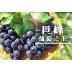 神谷ぶどう園 巨峰1kg(2〜3房)