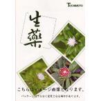 タラ木(刻) 500g タラボク/タラノキ〔栃本天海堂/生薬〕