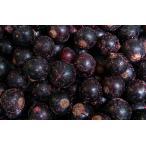 冷凍フルーツ ブラックカラント 1kg