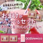 オマケ付き!ベリー スムージー2個セット 酵素 コエンザイムQ10 新発売 送料無料 キャンドルブッシュ