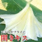 開きキス 天ぷらフライ用  25尾入 鱚