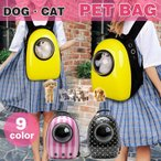 search-store_pet01
