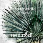 ユッカの種子 ロストラータ