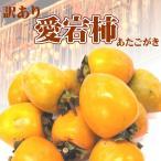 干し柿用 渋柿/訳あり 愛媛県産 愛宕柿 約10kg/送料無料