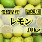 訳あり国産 レモン約10kg 愛媛県産 ワックス・防腐剤不使用 れもん 北海道・沖縄送料別途1000円