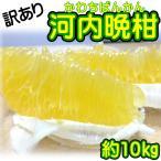 柑橘类 - 訳あり 愛媛県産 河内晩柑 約10kg