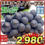 ぶどう 長野産 ナガノパープル 約350g×2 ご家庭用 パック 産地直送 葡萄 ブドウ フルーツ くだもの 食品 国華園