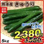 熊本産 きゅうり(5kg)ご家庭用 野菜 国華園