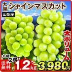 ぶどう 山梨産 シャインマスカット 約1.2kg ご家庭用 たねなし 皮ごと 大粒 パック  葡萄 ブドウ フルーツ くだもの 食品 国華園