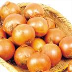北海道産 たまねぎ 20kg 1箱 玉ねぎ 野菜 国華園