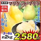 洋梨 新潟産 マリゲット・マリラ ご家庭用 約2kg 1箱 送料無料 国華園