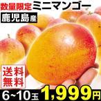 食品 鹿児島産 ミニマンゴー  1パック 約500g  送料無料 【数量限定】