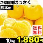 みかん 熊本産 ご家庭用 はっさく 10kg 1箱 送料無料