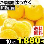 みかん 和歌山産 ご家庭用 はっさく 10kg 1箱 送料無料
