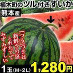 すいか ツル付き! 熊本産 植木町のスイカ 西瓜 1玉 1箱 M~2L 食品