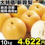 梨 大特価 新興梨 10kg 1箱
