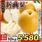 梨 【お買得】鳥取産 新興梨 10kg 1箱 送料無料 ご家庭用 和梨