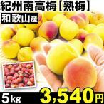 生梅 和歌山産 紀州南高梅・熟梅 5kg1箱 うめ 冷蔵 食品