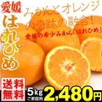 みかん 愛媛産 ご家庭用 はれひめ 5kg1箱  送料無料 濃厚みかん 高級柑橘 みかんとオレンジのいいとこどり
