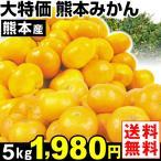 みかん 大特価 熊本産 みかん 5kg1箱 送料無料  食品 グルメ