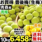 梅 青森産 生梅 【豊後梅】 10kg1組 送料無料 生梅 冷蔵便 食品
