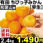 みかん 和歌山産 ちびっ子みかん 【早生】 2.4kg1組 小玉 送料無料 蜜柑 食品