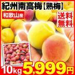 生梅 和歌山産 紀州南高梅 【熟梅】 10kg1箱 送料無料 うめ 梅 冷蔵便 食品