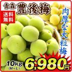 生梅 青森産 生梅 【豊後梅】 10kg1組 送料無料 うめ 梅 冷蔵便 食品