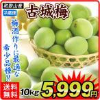 生梅 古城梅 10kg1箱 青梅 和歌山県産 傷あり 訳あり ご家庭用 うめ ウメ 梅 梅酒 食品