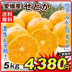 みかん 愛媛産 せとか(5kg)ご家庭用 無選別 えひめ 柑橘 かんきつ フルーツ 国華園