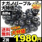 ぶどう ナガノパープル(約350g×2パック)傷あり長野県産 ご家庭用 葡萄 ブドウ 数量限定 国華園