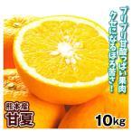 みかん 熊本産 甘夏(10kg)1箱 ご家庭用 M〜2L あまなつ 蜜柑 柑橘 フルーツ 果物 食品 国華園