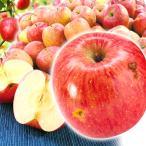 りんご 大特価 青森産 傷ありサンふじ (10kg)  ご家庭用 訳あり 数量限定 サンふじ ふじ 林檎 フルーツ 果物 国華園