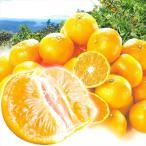 みかん 大特価 熊本産 みかん(10kg)S〜2L混合 ご家庭用 無選別 柑橘 かんきつ フルーツ 国華園
