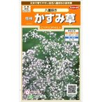 サカタのタネ 宿根かすみ草 八重咲き  【基本送料無料】