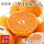 三ケ日みかん 早生 わせ 5kg 低農薬 有機肥料栽培 特撰 黒柳さんちの蜜柑