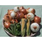 玉ねぎの元祖 泉州玉ねぎ 12個と 店長おまかせの安全新鮮野菜の詰合せ。 送料無料