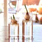 BULB VASE バルブベース 【ロングサイズ】 水栽培 ガラス製 フラワーベース 花瓶 球根 スパイス プレゼント ギフト