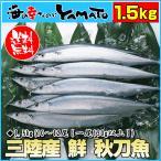 三陸産 鮮 秋刀魚 1尾130g以上保証 総重1.5kg(10〜12尾入が目安となります) 生...
