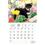 しばいぬ日和 (インプレスカレンダー2020)