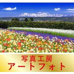 額装写真 オリジナルプリント 「ポピーの花咲くファーム富田」北海道/空知郡中富良野町 (通常サイズ:426×336mm)