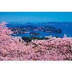 PT-049 満開の桜と松島/宮城県