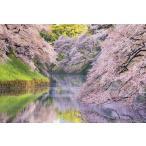 PT-183 満開の桜咲く千鳥ヶ淵