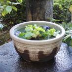 信楽焼 13号 すいれん鉢 メダカ鉢 金魚鉢 陶器  睡蓮鉢 手水鉢 鉢 睡蓮 su-0054の画像
