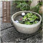 信楽焼 14号 すいれん鉢 メダカ鉢 金魚鉢 陶器  睡蓮鉢 手水鉢 鉢 睡蓮 su-0085の画像