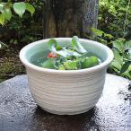 信楽焼 11号 すいれん鉢 メダカ鉢 金魚鉢 陶器  睡蓮鉢 手水鉢 鉢 睡蓮 su-0116の画像