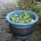 信楽焼 13号 すいれん鉢 メダカ鉢 金魚鉢 陶器  睡蓮鉢 手水鉢 鉢 睡蓮 su-0133の画像