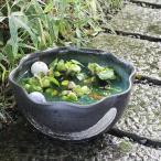 信楽焼 12号緑釉ハケメ花型水鉢 メダカ鉢、金魚鉢 睡蓮鉢 陶器 ハス鉢 はす鉢 めだか鉢 鉢 陶器 水連鉢 水鉢 睡蓮鉢 手水鉢 su-0157の画像