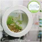 信楽焼 陶器水槽 丸型 ミニサイズ 陶器 ガラス 水槽 和風  インテリア メダカ鉢 金魚鉢 水鉢 やきものの画像
